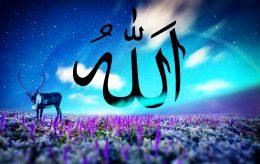Tilbyr halalferie i Norge som følger islamsk lovverk til punkt og prikke