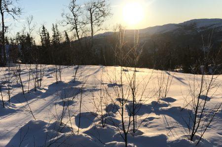 Den som drømmer om snødekt, hvit natur bedriver «hvithetsproduksjon»